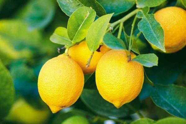 Mirisni štapići - Limun